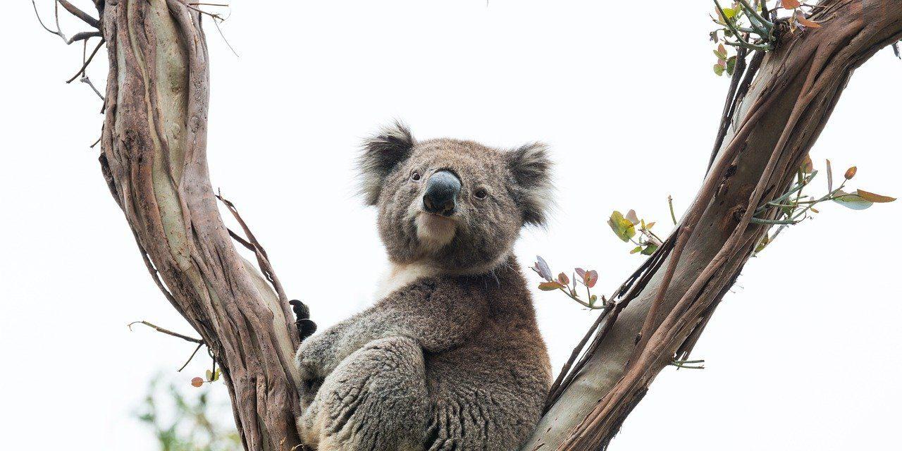e School Library - Classes Flam - La classe des Koalas : 8 à 9 ans.