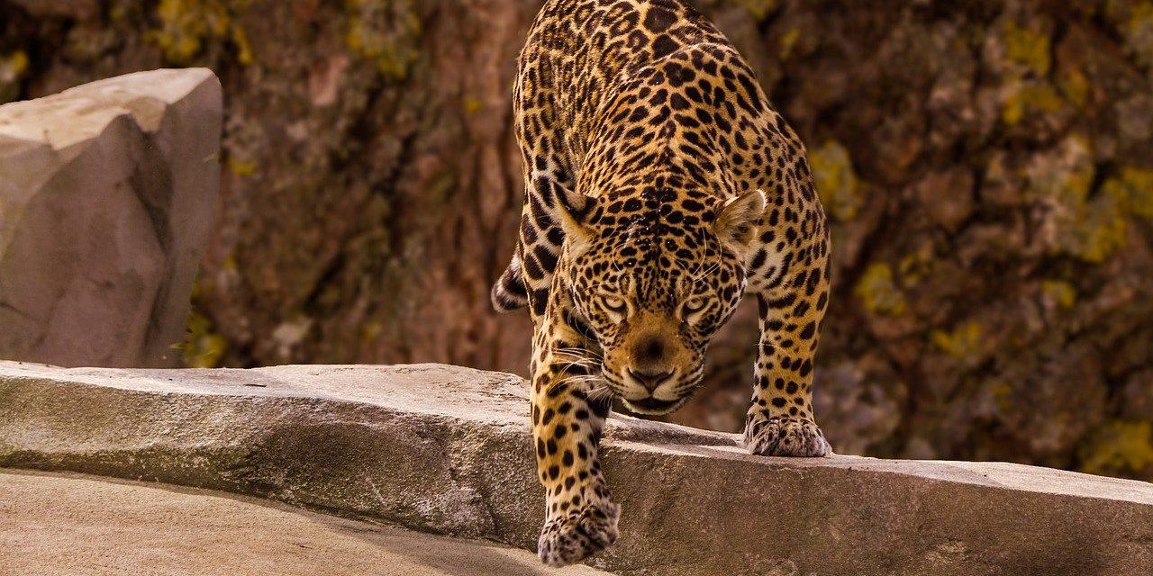 e School Library - Classes Flam - La classe des Jaguars : 10 à 11 ans.